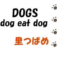 【DOGS dog eat dog】1話(ネタバレ注意)感想-里つばめ/イァハーツ9月号 新章連載スタート♡【追記あり】